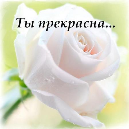 http://zdesvsyo.ru/_ph/226/2/807953718.jpg