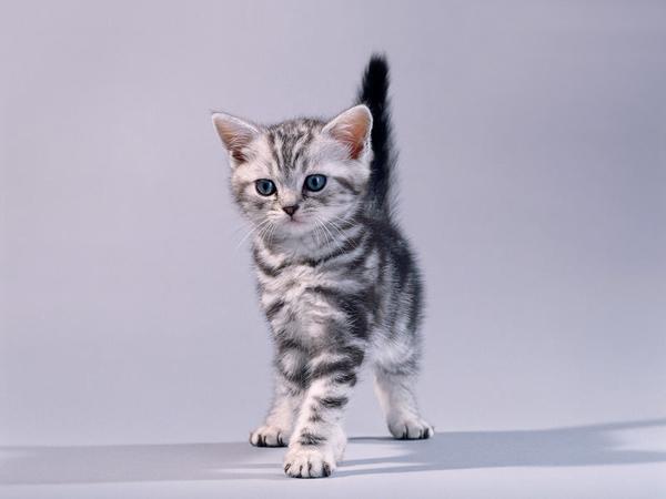 Котята Картинки, рисунки красивые